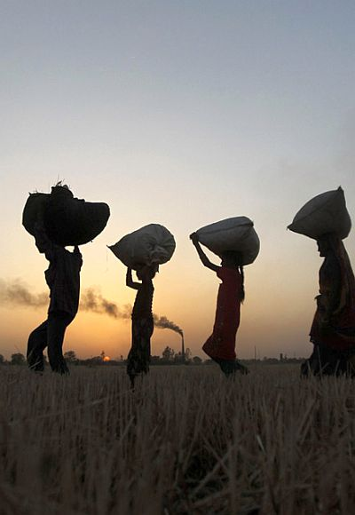Labourers carry harvested wheat as they walk in a field on the outskirts of Ahmedabad.