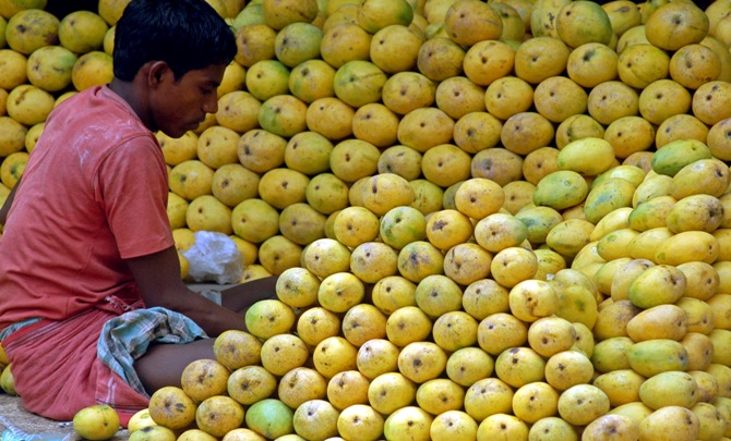 Image: A hawker arranges mangoes at a roadside shop in Chennai. Photograph: Babu/Reuters