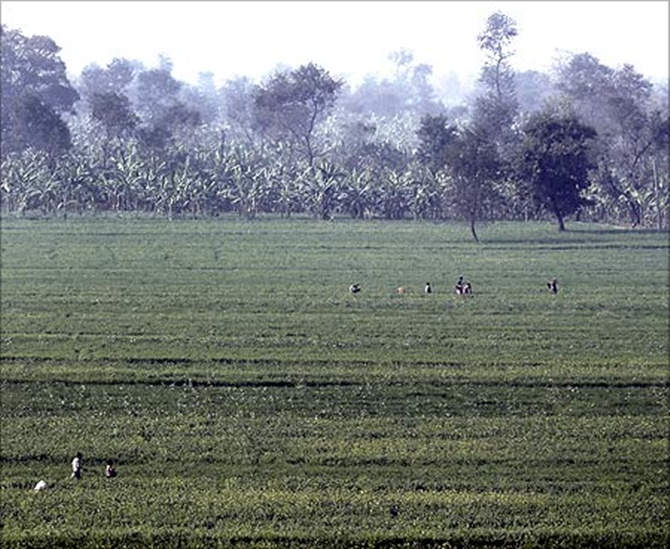 Farmers work in a paddy field on the outskirts of Patna.