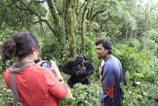Tourists take pictures of a mountain gorilla in Virunga national park in Congo.