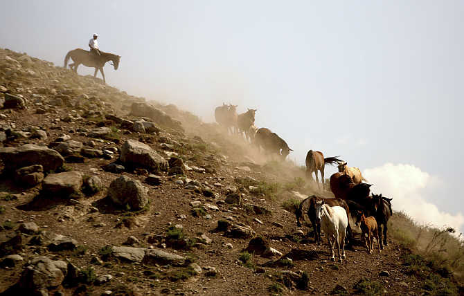 A herdsman leads his horses home in the mountains of Kyrgyzstan, about 40km north of the capital Bishkek, Kyrgyzstan.