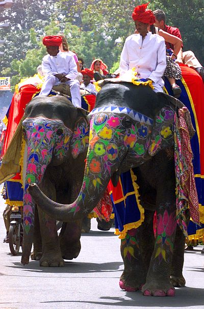 Decorated elephants walk on a street during the Elephant Festival in Jaipur