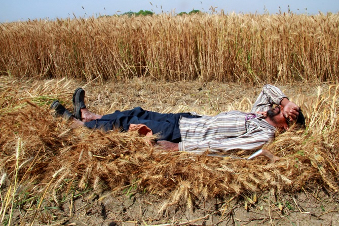 A labourer rests on harvested wheat crop at Chando village, Punjab.