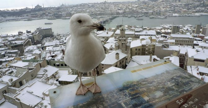 A seagull sits at the observation deck of the historical Galata tower with snow-covered Karakoy district and the old city in the background in Istanbul.