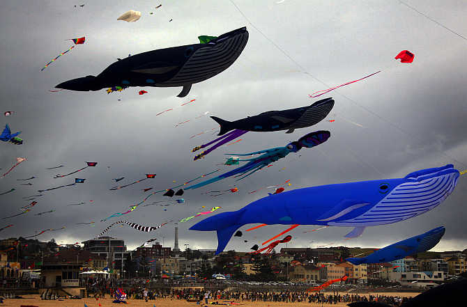 Large whale-shaped kites and others fly above a crowd gathered for the Festival of the Winds on Sydney's Bondi Beach, Australia.