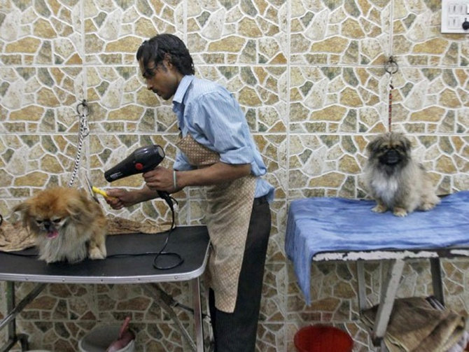 A groomer blow dries a dog after it was bathed at a pet grooming salon in New Delhi.