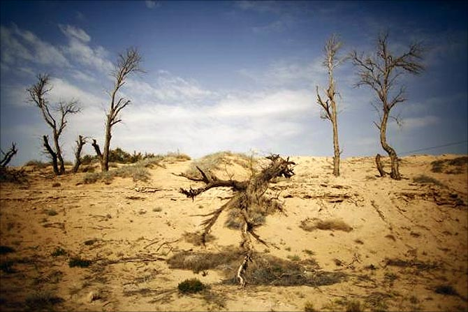 Dead trees are seen near the dried up Shiyang river on the outskirts of Minqin town, Gansu province.