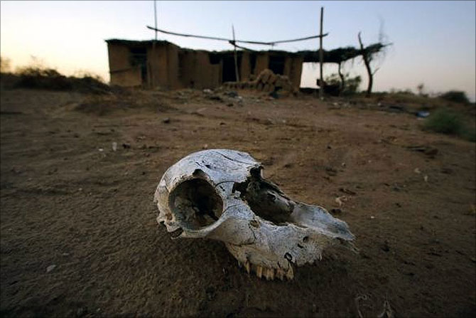 An animal skull lies on the ground at an abandon farm, near the dried up Shiyang river on the outskirts of Minqin town, Gansu province.