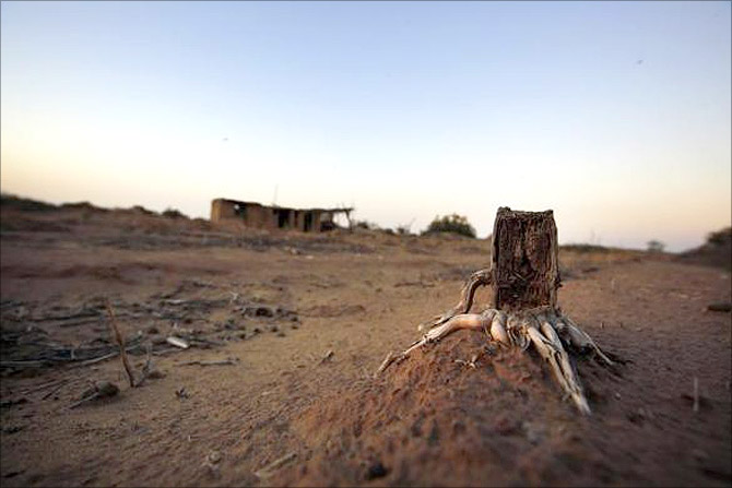 A dry plant stump is seen an abandon farm, near the dried up Shiyang river on the outskirts of Minqin town, Gansu province.