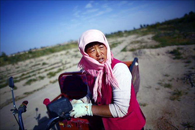 A woman takes a break as she harvests cotton near the dried up Shiyang river on the outskirts of Minqin town, Gansu province.