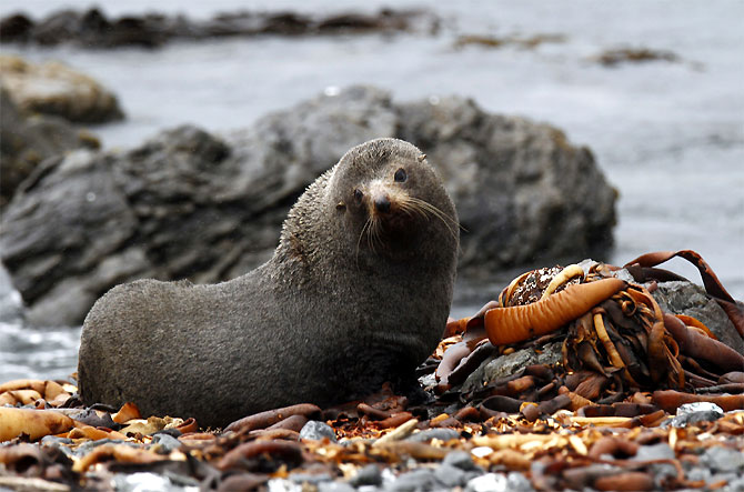 A seal is seen at Wellington's south coast.