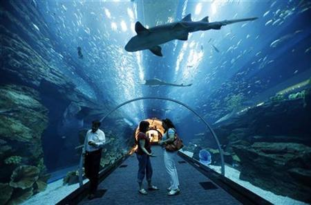 Visitors looks up as fish swim in the aquarium tunnel in Dubai Mall, which covers the area of 50 soccer pitches.