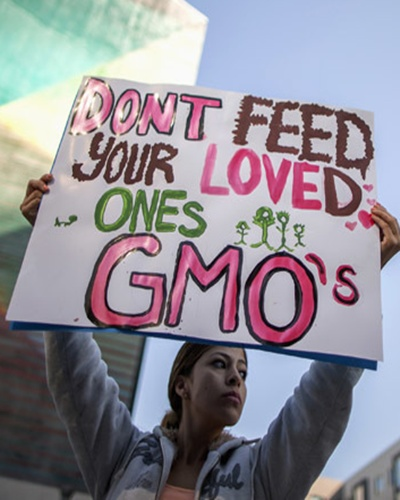 A protestor opposes the introduction of GM crops.