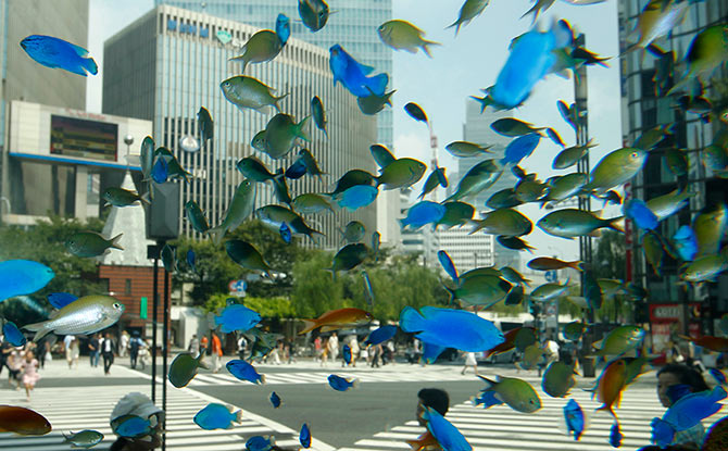 Tropical fish from the southern Japanese island of Okinawa swim in a temporary aquarium in Tokyo's Ginza shopping district.