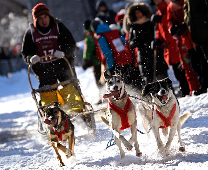 Jerome Poulin competes during the Grande Viree dog sled race in the streets of the Old Quebec at the Quebec Winter Carnival in Quebec City.