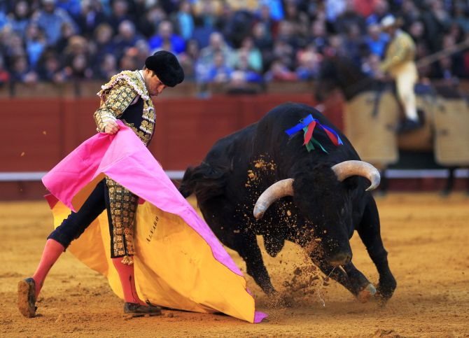 Spanish matador Julian Lopez El Juli performs a pass to a bull during a bullfight at The Maestranza bullring in the Andalusian capital of Seville, southern Spain.