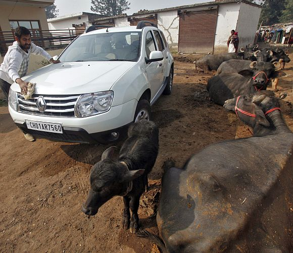 A villager cleans his Renault Duster car as buffaloes look on nearby, outside his house in Kishangarh village on the outskirts of the northern Indian city of Chandigarh.