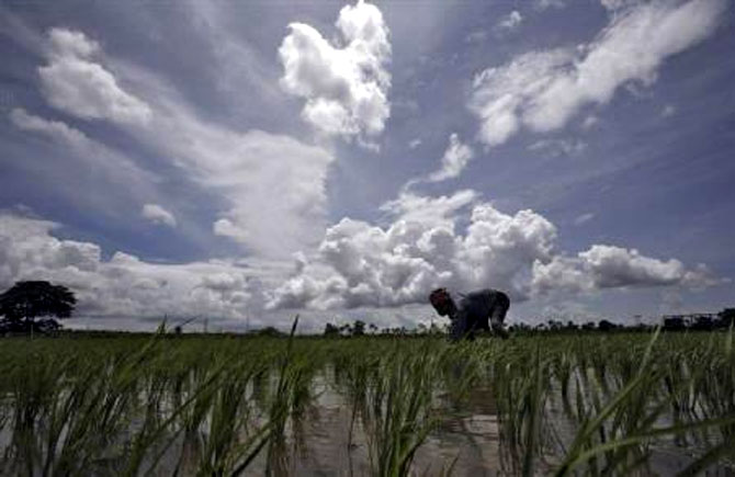 A farmer works in his paddy field against the backdrop of monsoon clouds in Agartala.