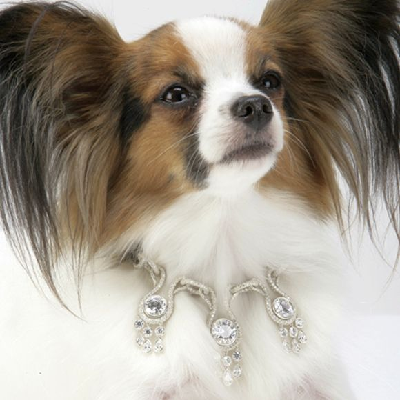 Diamond-studded dog collar from i Love Dog Diamonds.