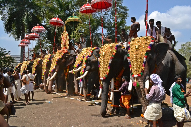 Elephants during a temple festival.