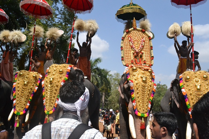 Many elephants turn violent during the temple festival season.