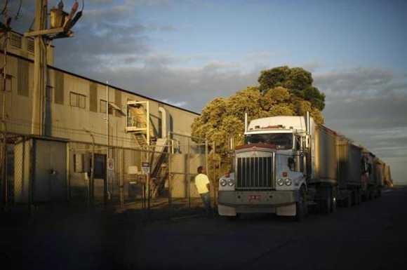 A truck driver waits to load his vehicle outside the Incitec Pivot fertilizer and explosive chemical plant in Geelong.
