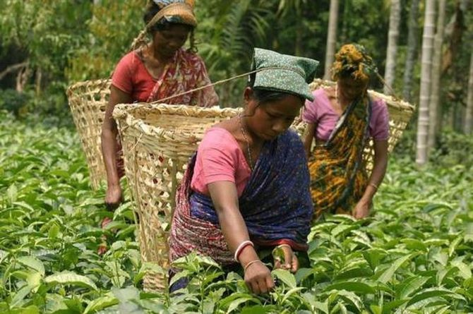 Tata Global is keen to tap newer markets in the US and UK for its tea brands