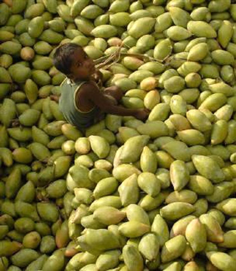 A child sits on a heap of mangos at a fruit wholesale market in Kodur village, about 650 km south of Hyderabad.