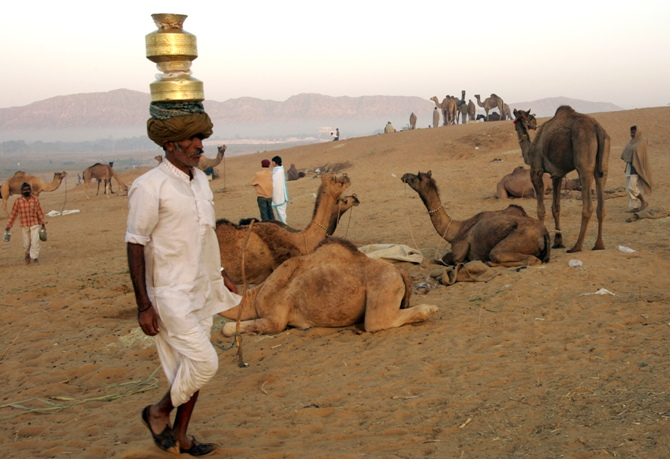 A Rajasthani milkman brings milk at the Pushkar fair, in India's desert state of Rajasthan.