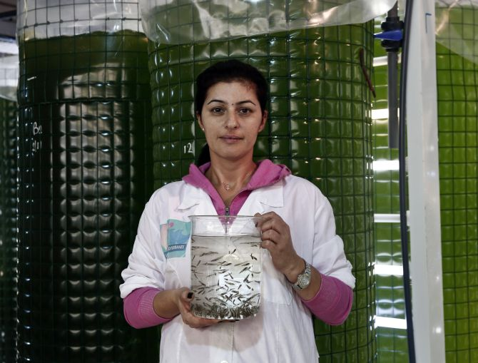 Stavroula Chasandra, 35, an ichthyologist - a scientist who studies fish - of Selonda fish farming company holds a glass container with newborn sea bass at a hatchery in Psachna village on Evia island.