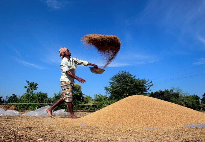 A farmer winnows paddy crops at a field on the outskirts of Agartala.