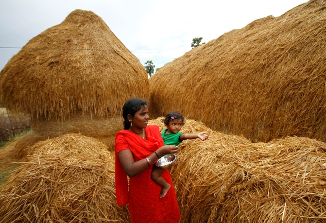 A woman feeds her child next to a stack of dry paddy at Nellore district in Andhra Pradesh.