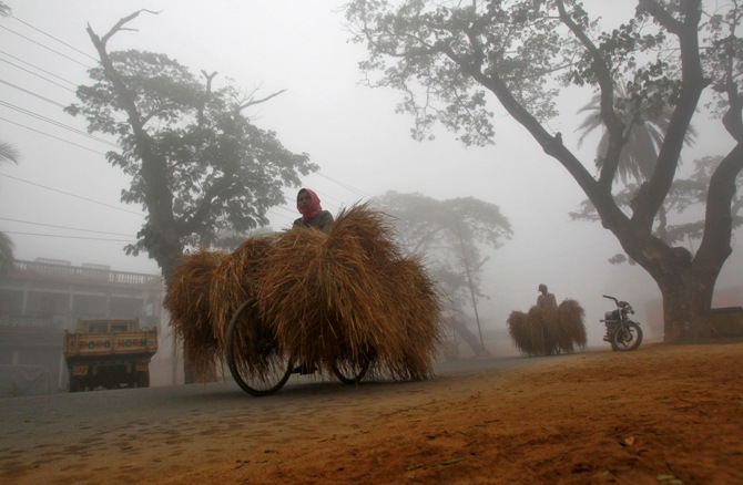 Farmers ride their bicycles carrying dry straw through a road amid dense fog on a cold winter morning.