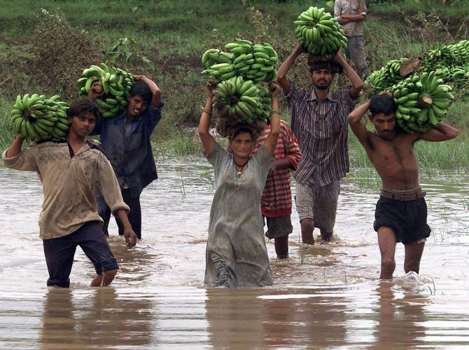 Indian tribal labourers carry bananas through a flooded road in Varsali village 250 km (156 miles) south of the western Indian city of Ahmedabad.