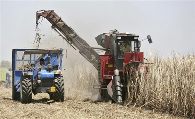 A harvesting machine works in a sugarcane field at Olpad village.