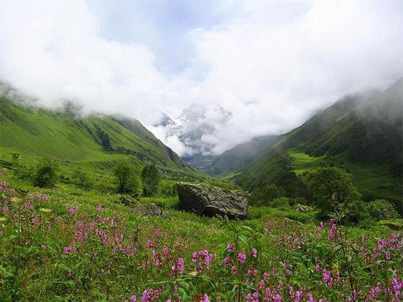 Uttarakhand's Valley of Flowers