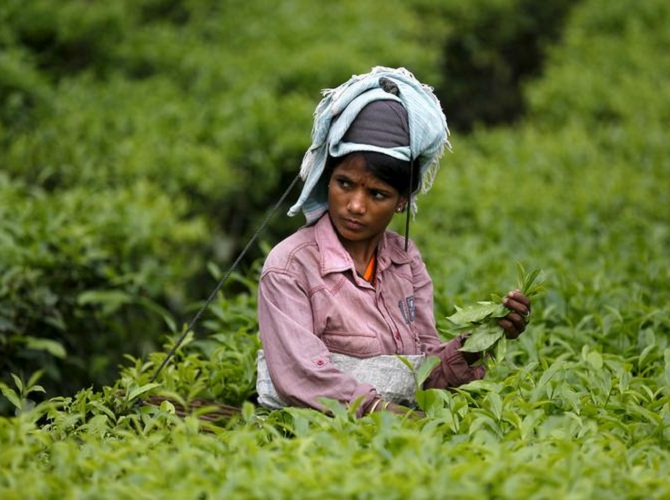 Assam tea worker
