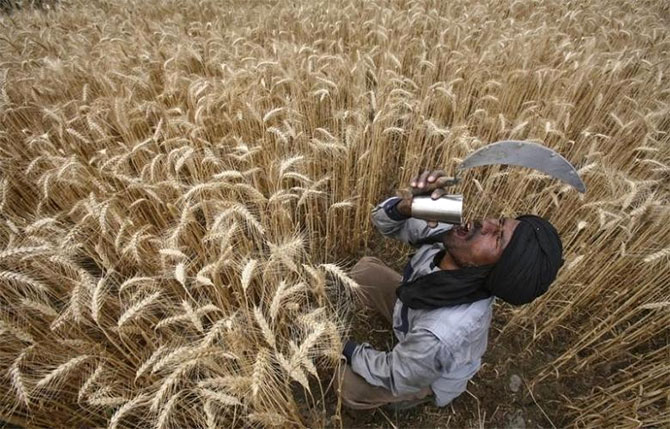MSP hike may hit India's farm exports