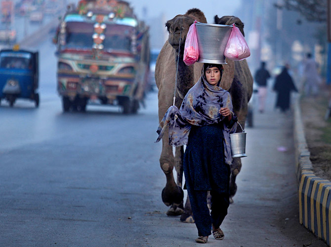 A girl leads her camels as she sells fresh camel's milk on the GT road Peshawar, Pakistan, December 5, 2016. Photograph: Fayaz Aziz/Reuters