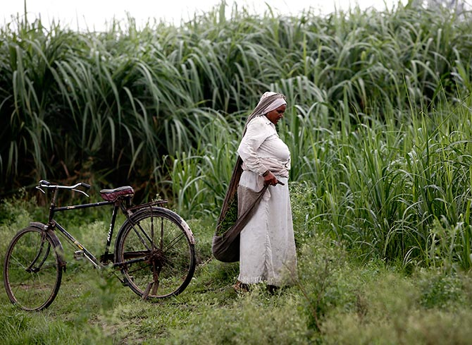A farmer removes dried grass from her sugarcane field in Shamli, in the northern Indian state of Uttar Pradesh July 19, 2014. Photograph: Anindito Mukherjee/Reuters