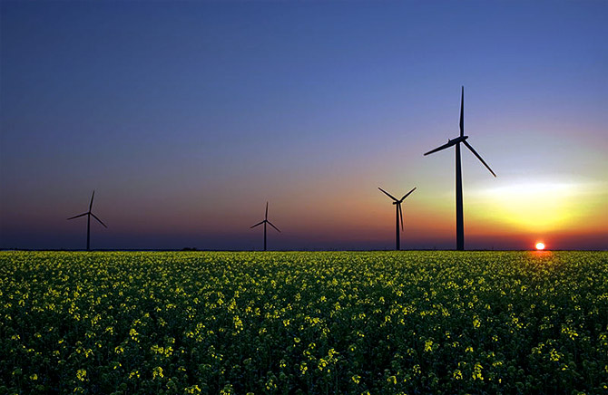 Wind, solar, and hydroelectricity are three emerging renewable sources of energy. Wind turbines in a rapeseed field in Sandesneben, Germany. Photograph: Courtesy Jürgen from Sandesneben, Germany/Wikimedia Commons.