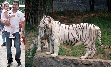 Karthi with Diya. A picture of white tigers
