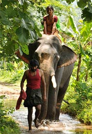 A scene from Kumki
