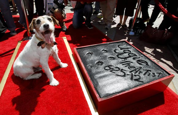Uggie leaves his paw prints in cement in the forecourt of the Grauman's Chinese theatre in Hollywood in June 2012