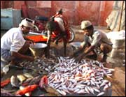 Fishermen are back to work, but nervous