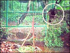 The enclosure where Rahul lives