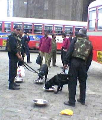 NSG's dog squad