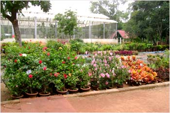 People of Bengaluru enjoy the flower show