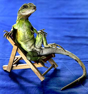 Dragon on the chair