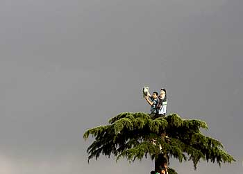 Mousavi's supporters protest on a tree